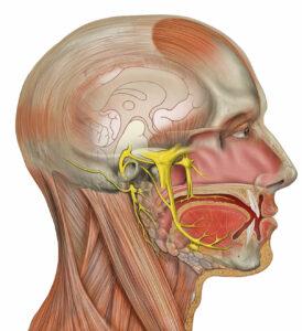 Head_deep_facial_trigeminal-274x300 TRATAMENTO DA NEURALGIA DO TRIGÊMEO ATRAVÉS DA ACUPUNTURA